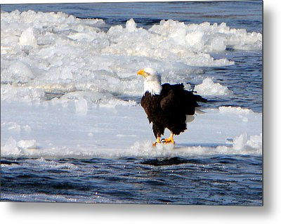 On The Edge Metal Print by Dave Clark
