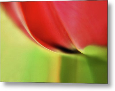 Metal Print featuring the photograph  Tulip's  Edge by Elaine Manley
