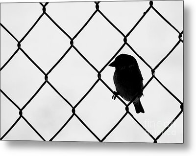On The Fence Metal Print by Afrodita Ellerman