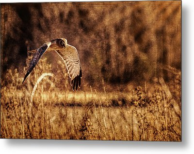 Metal Print featuring the photograph On The Hunt by Annette Hugen