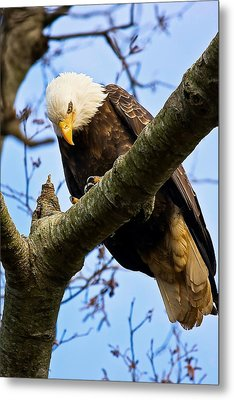 On The Hunt Metal Print by Naman Imagery