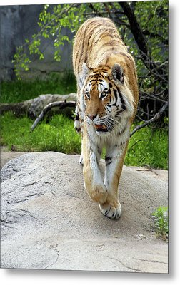 On The Prowl Metal Print by Gordon Dean II