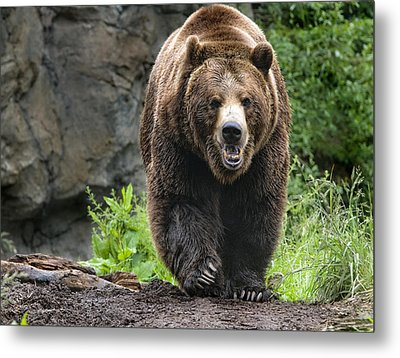 On The Prowl Metal Print by Melody Watson