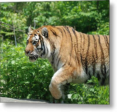 Metal Print featuring the photograph On The Prowl by Richard Bryce and Family