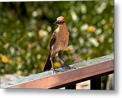 On The Rail Metal Print by Christopher Holmes