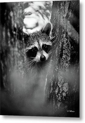 On Watch - Bw Metal Print by Christopher Holmes