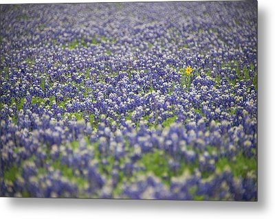 One Metal Print by Aaron Bedell