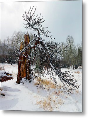 Metal Print featuring the photograph One Branch Left by Shane Bechler