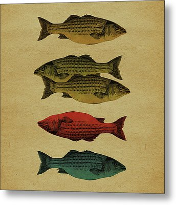 One Fish, Two Fish . . . Metal Print by Meg Shearer