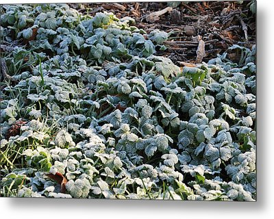 Metal Print featuring the photograph One Frosty Morning by Sergey Nassyrov