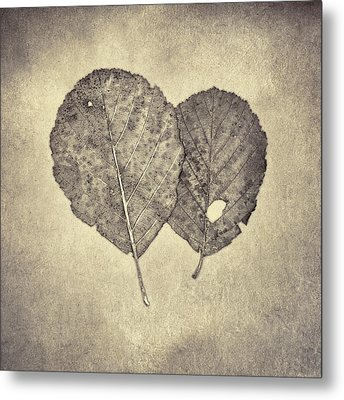 One Leaf Two Leaf Metal Print by Scott Norris