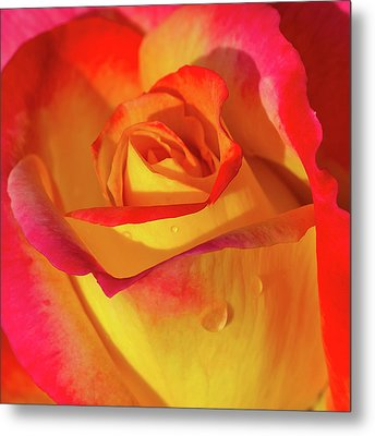 Metal Print featuring the photograph One Macro Rose by Julie Palencia