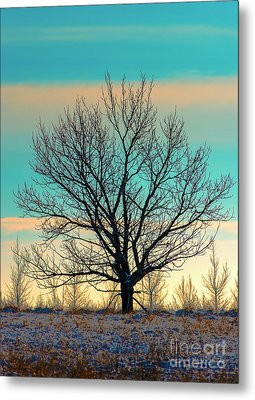 Metal Print featuring the photograph One by Nina Stavlund