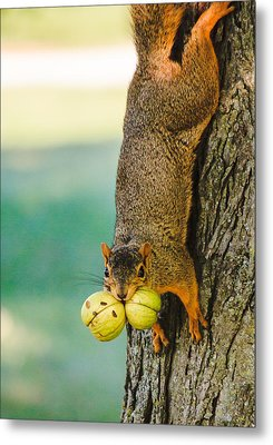 One Nut Is Never Enough Metal Print by Joni Eskridge