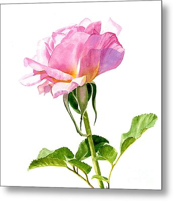 One Pink Rose Blossom Square Design Metal Print by Sharon Freeman