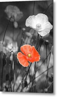 One Red Poppy Metal Print by Bonnie Bruno