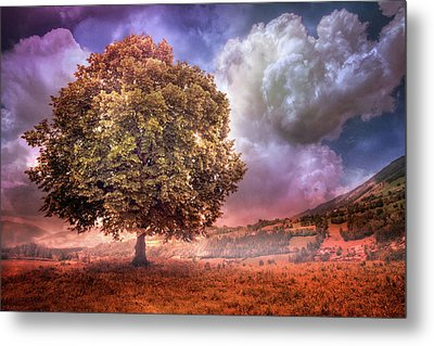 Metal Print featuring the photograph One Tree In The Meadow by Debra and Dave Vanderlaan