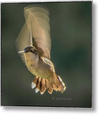 One_wing Metal Print