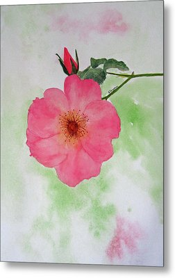 Open Rose Metal Print