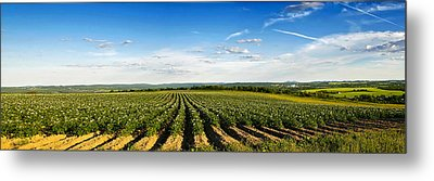Metal Print featuring the photograph Open View by Gary Smith