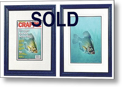 Open Water Crappie Metal Print by Jon Q Wright
