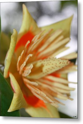 Opening Metal Print by Dawn M Brewer
