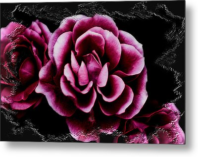Metal Print featuring the photograph Ophelia's Roses by Shelly Stallings