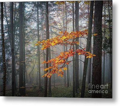 Metal Print featuring the photograph Orange And Grey by Elena Elisseeva