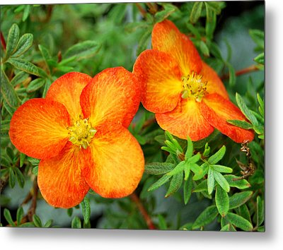 Metal Print featuring the photograph Orange And Yellow by Marilynne Bull
