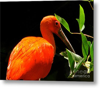 Orange Beauty Metal Print