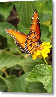 Orange Butterfly Metal Print