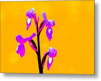 Orange Champagne Orchid Metal Print
