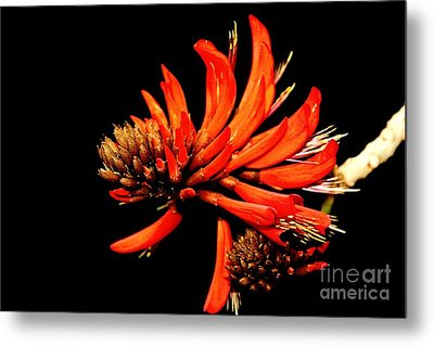 Metal Print featuring the photograph Orange Clover II by Stephen Mitchell
