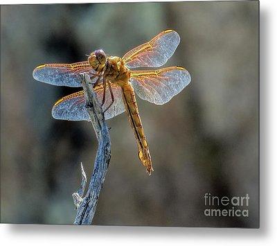 Dragonfly 6 Metal Print