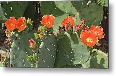 Orange Dream Cactus Metal Print