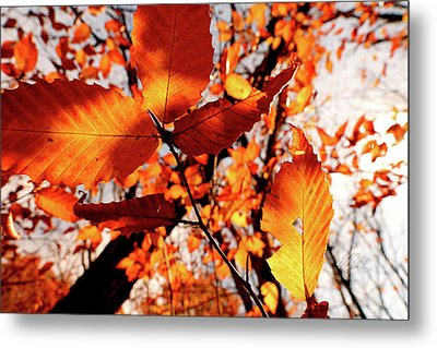 Orange Fall Leaves Metal Print by Meta Gatschenberger