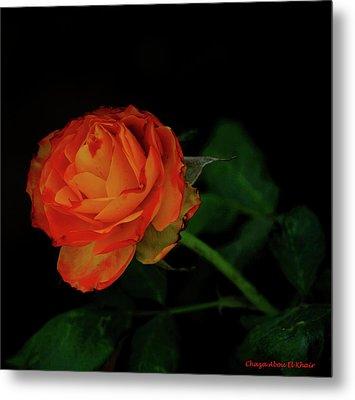 Orange Flower Metal Print by Chaza Abou El Khair