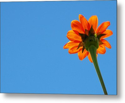 Metal Print featuring the photograph Orange Flower On Blue Sky by Debbie Karnes