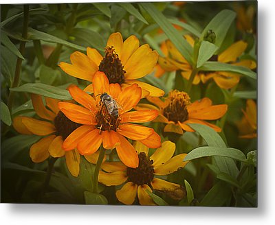 Orange Flowers And Bee Metal Print