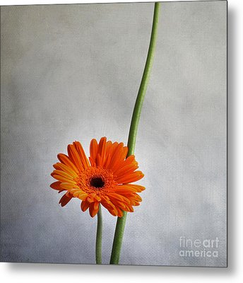 Orange Gernera Metal Print by Bernard Jaubert