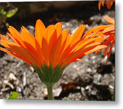 Orange Glory Metal Print