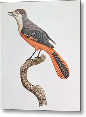 Orange Jay Metal Print by Jacques Barraband