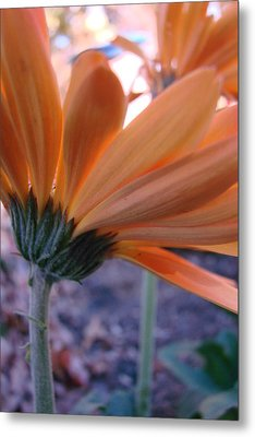Orange Lady Metal Print