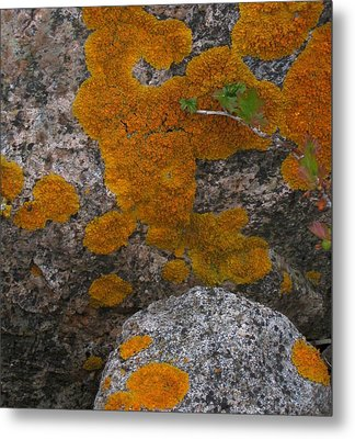 Metal Print featuring the photograph Orange Lichen On Granite by Mary Bedy