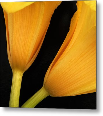 Orange Lily Abstract Metal Print