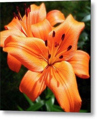 Orange Lily Joy Metal Print