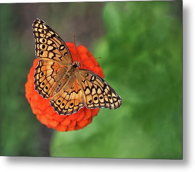Orange Orange Green Metal Print