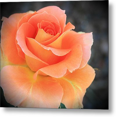 Metal Print featuring the photograph Orange Sherbert by Marna Edwards Flavell