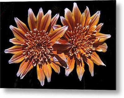 Orange South African Flowers Metal Print