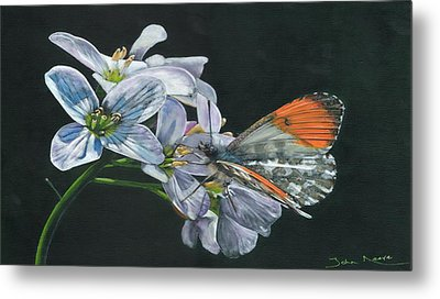 Orange Tip  Metal Print